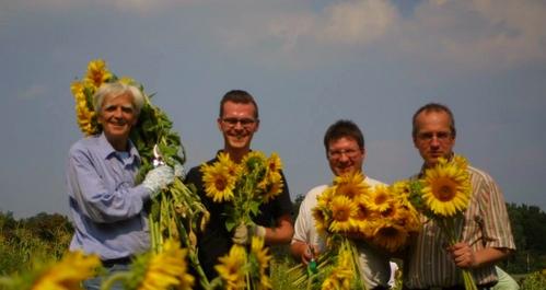 Sonnenblumenernte in Gatow